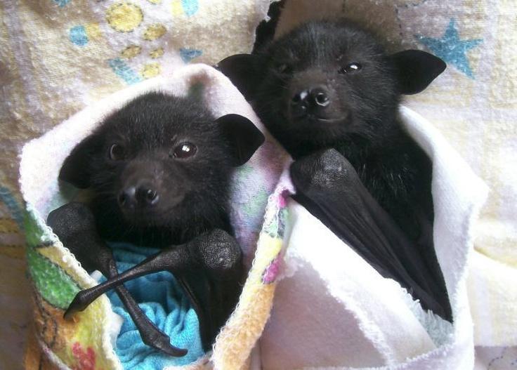 morcegos aproveitando